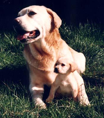 Le labrador (avec video et photos de Djuna) Famill10