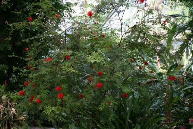 La Serre tropicale du Parc Phoenix de Nice Callia13