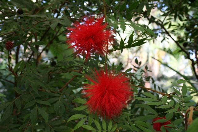 La Serre tropicale du Parc Phoenix de Nice Callia14