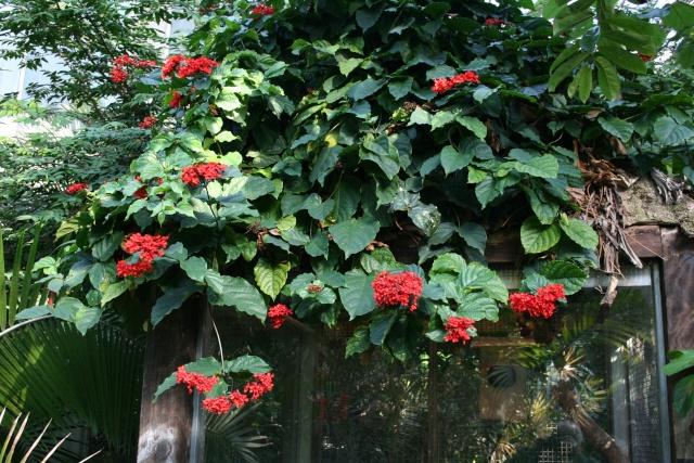 La Serre tropicale du Parc Phoenix de Nice Clerod13