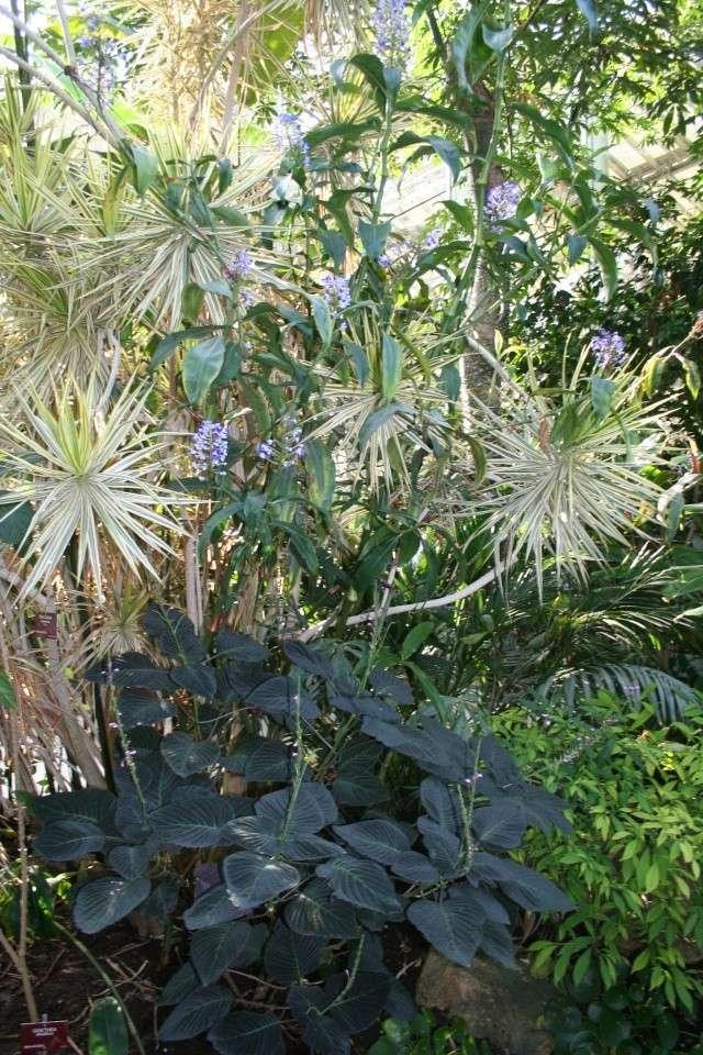 La Serre tropicale du Parc Phoenix de Nice Dichor15