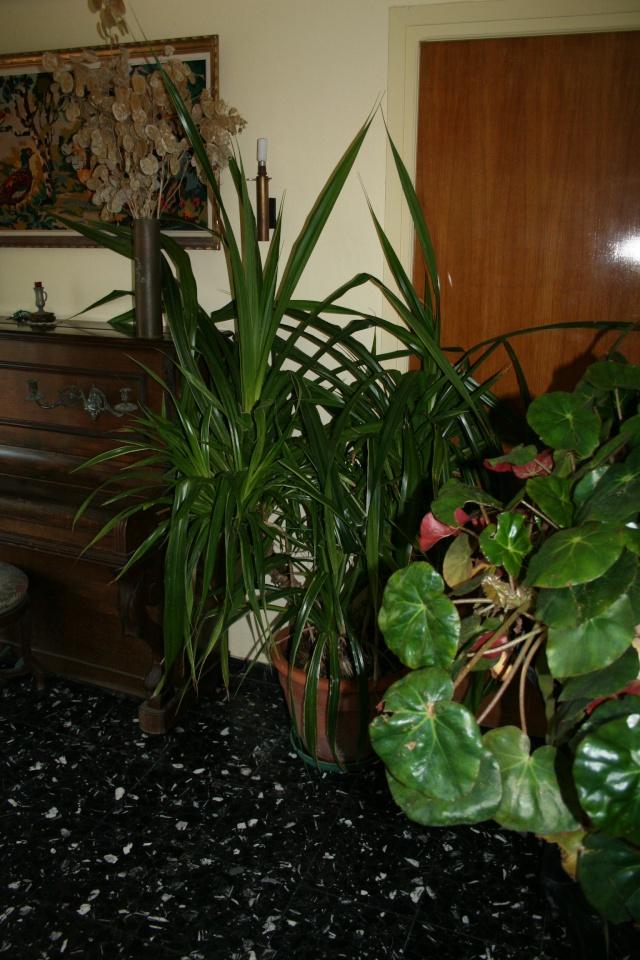 Les plantes que j'ai maintenant en intérieur, dans ma maison Entree11