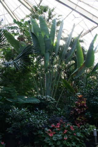 La Serre tropicale du Parc Phoenix de Nice Ravena12