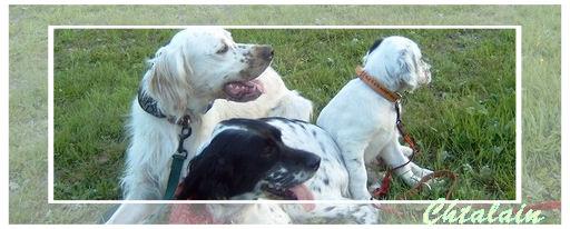 Nos amis les chiens