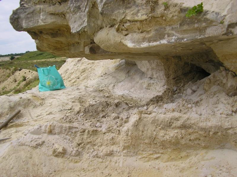La vente de fossiles, les fouilles sauvages Le_gue10