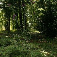Les plantes sauvages. Chardo11