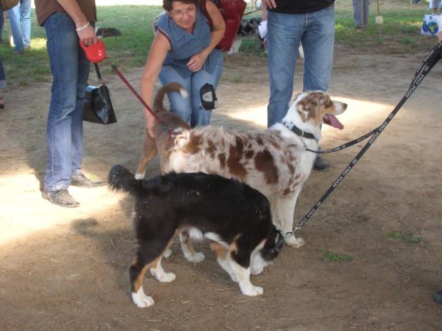 Régionale d'élevage Berger Australien à Sendets 16/09/07 - Page 5 Dscn3517