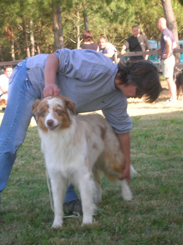 Régionale d'élevage Berger Australien à Sendets 16/09/07 - Page 5 Dscn3519