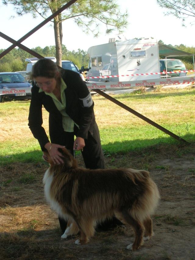 Régionale d'élevage Berger Australien à Sendets 16/09/07 - Page 5 Dscn3541