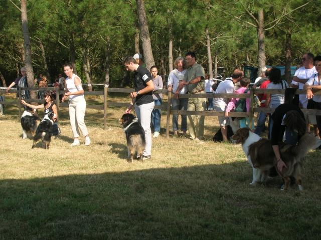 Régionale d'élevage Berger Australien à Sendets 16/09/07 - Page 5 Dscn3553
