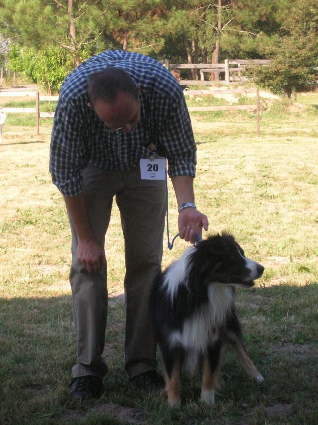 Régionale d'élevage Berger Australien à Sendets 16/09/07 - Page 5 Dscn3559
