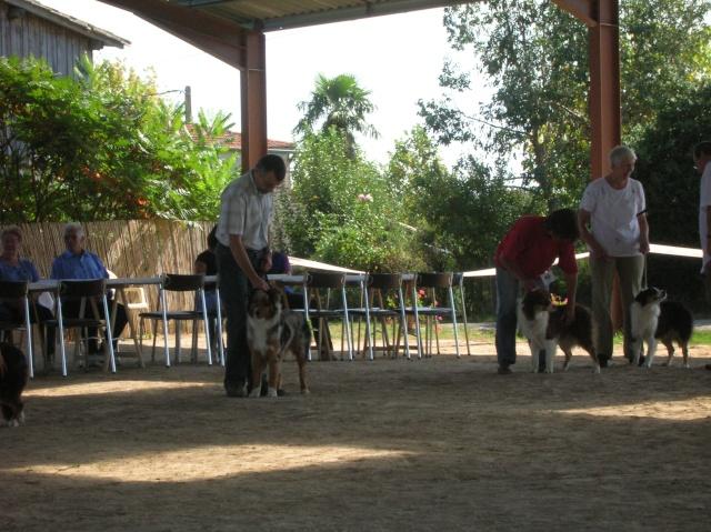 Régionale d'élevage Berger Australien à Sendets 16/09/07 - Page 5 Dscn3569