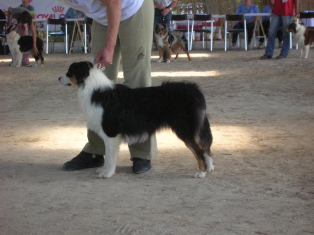 Régionale d'élevage Berger Australien à Sendets 16/09/07 - Page 5 Dscn3571