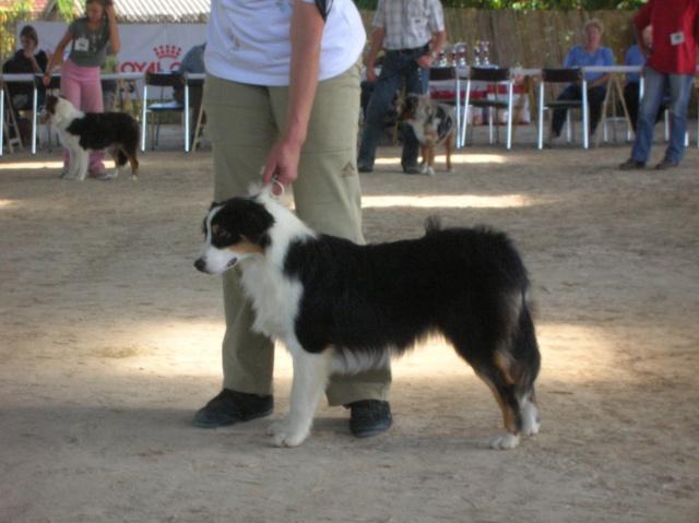 Régionale d'élevage Berger Australien à Sendets 16/09/07 - Page 5 Dscn3572