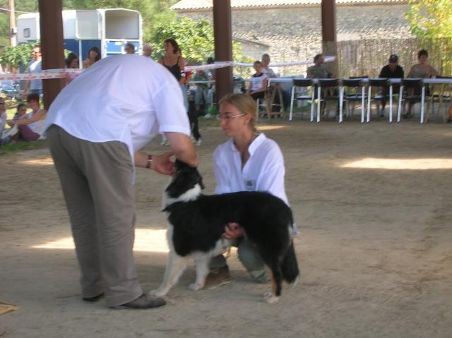 Régionale d'élevage Berger Australien à Sendets 16/09/07 - Page 5 Dscn3610