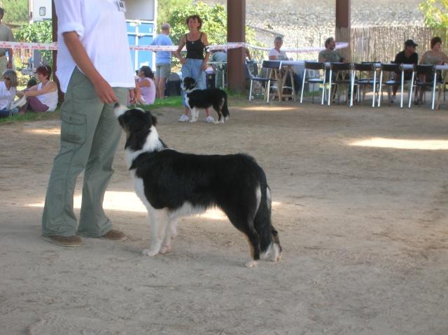 Régionale d'élevage Berger Australien à Sendets 16/09/07 - Page 5 Dscn3611