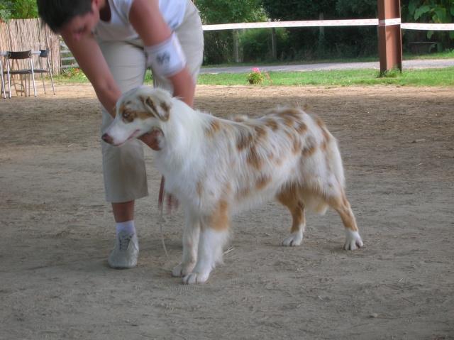 Régionale d'élevage Berger Australien à Sendets 16/09/07 - Page 5 Dscn3613