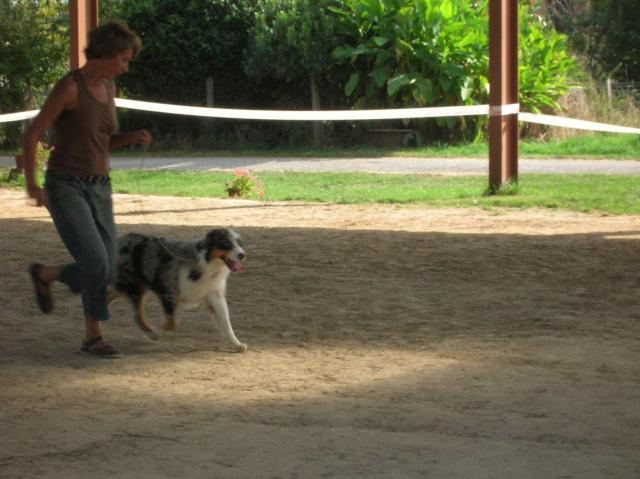 Régionale d'élevage Berger Australien à Sendets 16/09/07 - Page 5 Dscn3619
