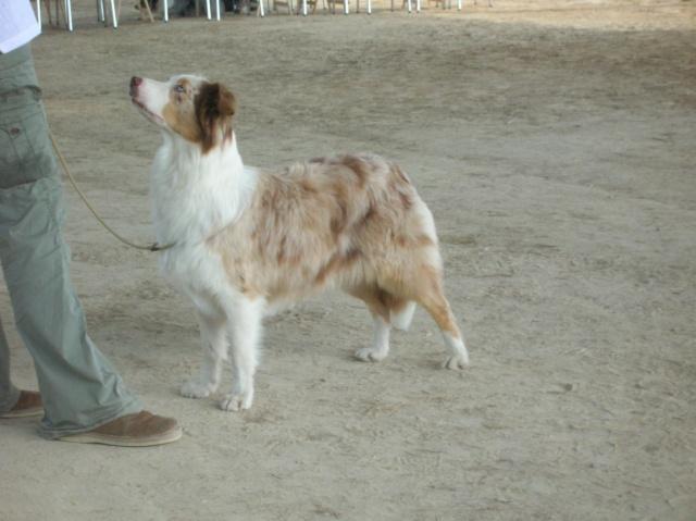 Régionale d'élevage Berger Australien à Sendets 16/09/07 - Page 5 Dscn3654