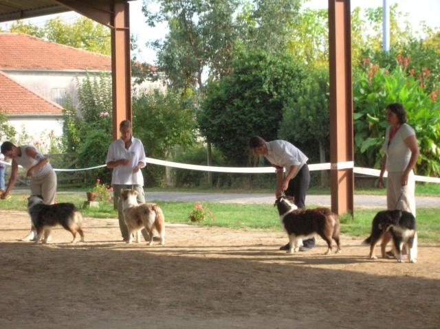 Régionale d'élevage Berger Australien à Sendets 16/09/07 - Page 5 Dscn3660