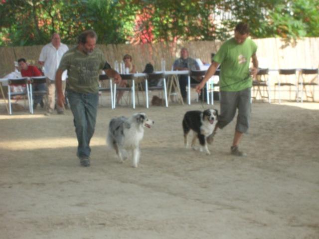 Régionale d'élevage Berger Australien à Sendets 16/09/07 - Page 5 Dscn3662