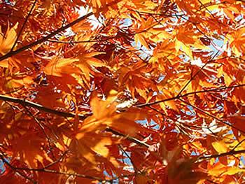2 quizz sur l.automne! Arbre10
