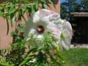 petit tour de bon matin Jardin11