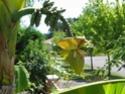 petit tour de bon matin Jardin15