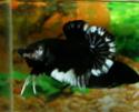 black white Aquast10