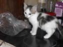 alimentation chaton à partir de quel âge ? - Page 2 Pict1610