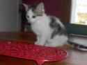alimentation chaton à partir de quel âge ? - Page 2 Pict1612