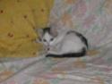 alimentation chaton à partir de quel âge ? - Page 2 Pict1615