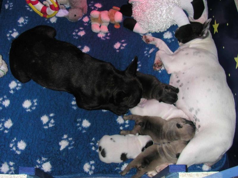 Les mamans et leurs bébés 07_30v10