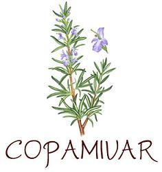 Les plantes aromatiques Logo_c10