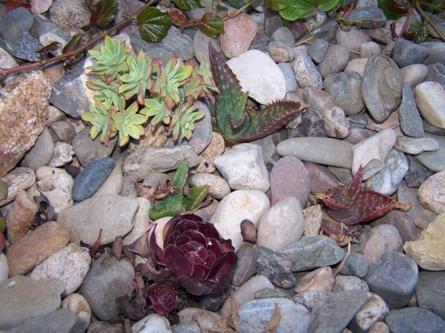cherche plantes grasses Enfant11