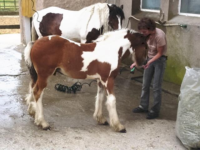 Iarann Stud., l'élevage de Fer 2007-011
