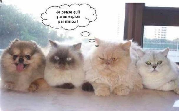 Images humoristiques - Page 5 Matou_10