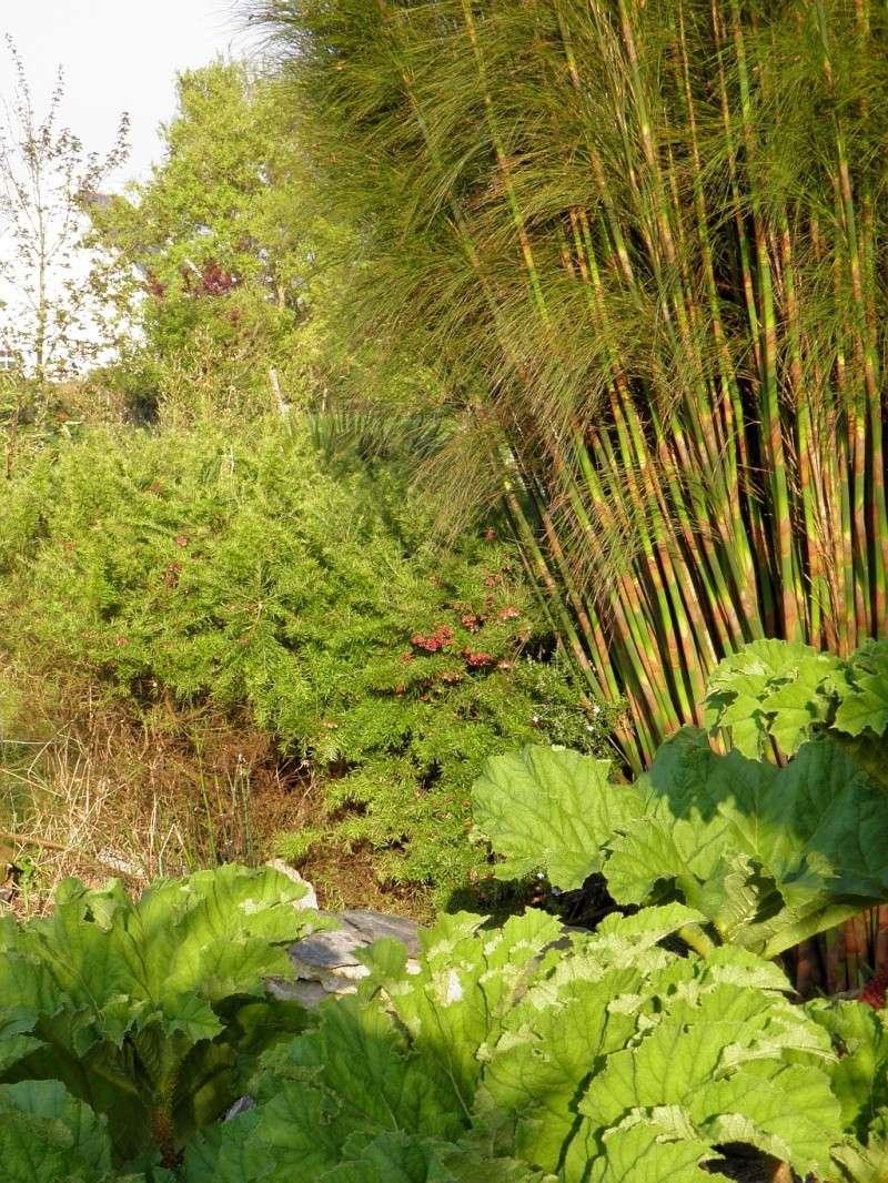 Un petit tour, dans mon jardin P4180310