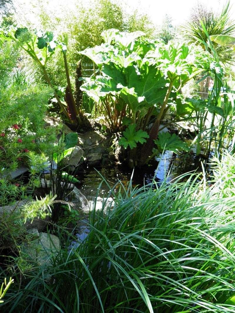 Un petit tour, dans mon jardin P5140510