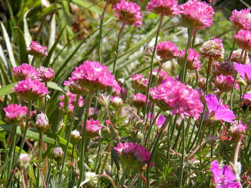 Un petit tour, dans mon jardin P5140611