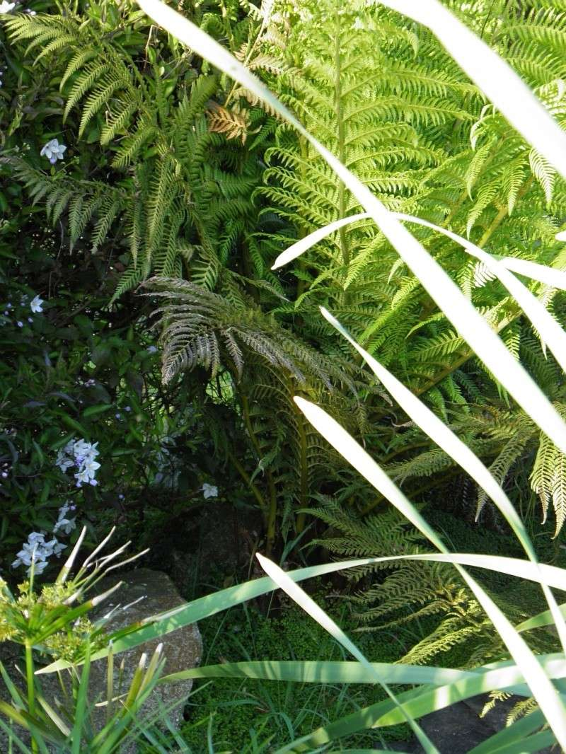 Un petit tour, dans mon jardin P5240711