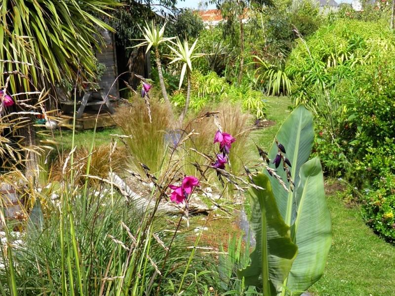 Un petit tour, dans mon jardin P6180911
