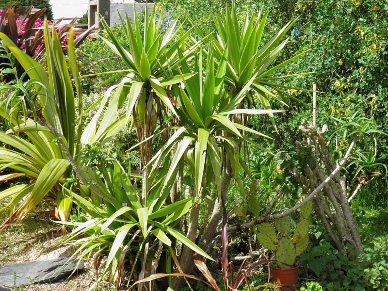Un petit tour, dans mon jardin P6180914