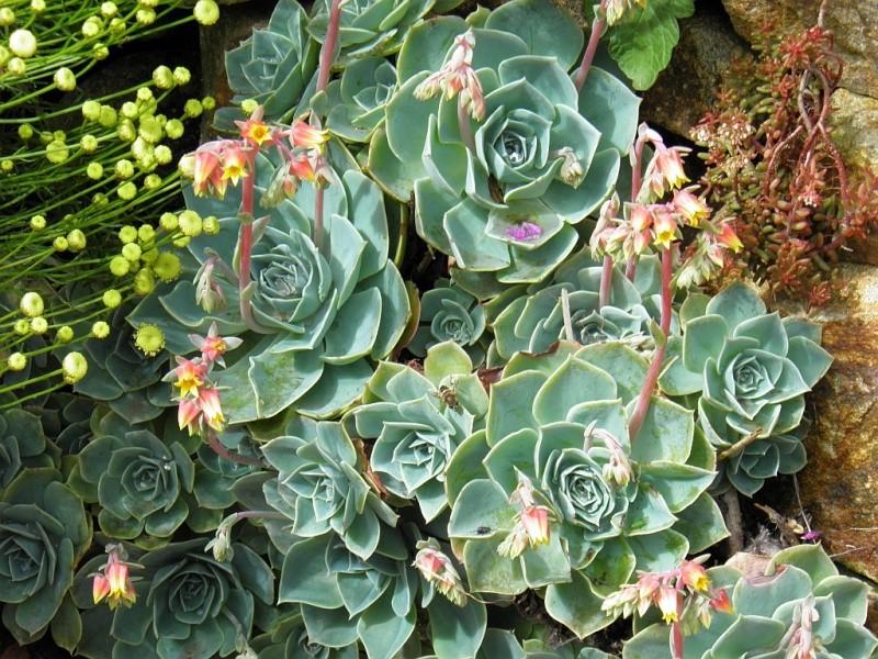 Un petit tour, dans mon jardin P6180916