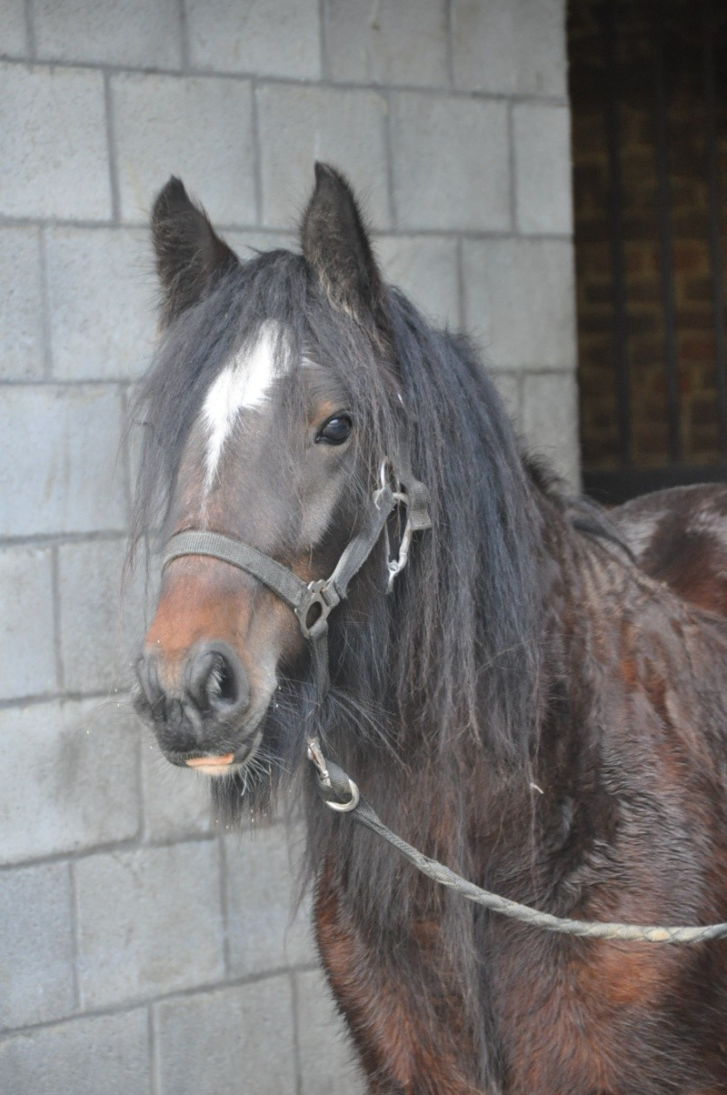 Tonkas Boy! fils de Tonka et petit fils de Lottery horse : news p.8!!! 336910
