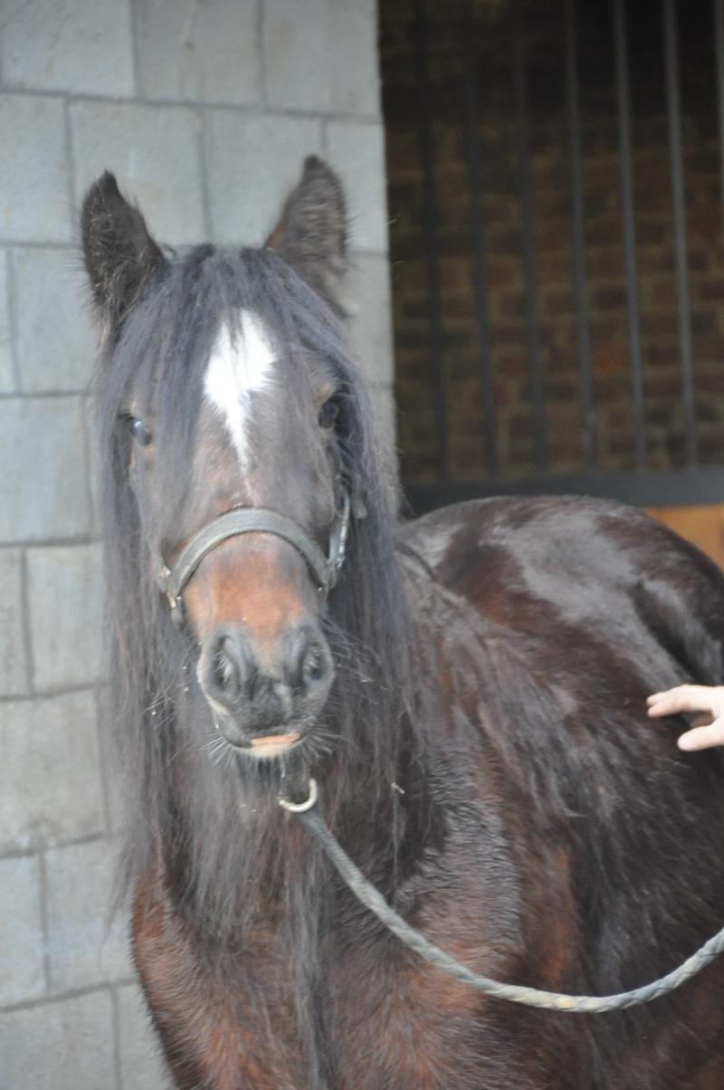 Tonkas Boy! fils de Tonka et petit fils de Lottery horse : news p.8!!! 337010