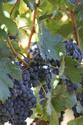 Le vin de Francis - Page 7 B911