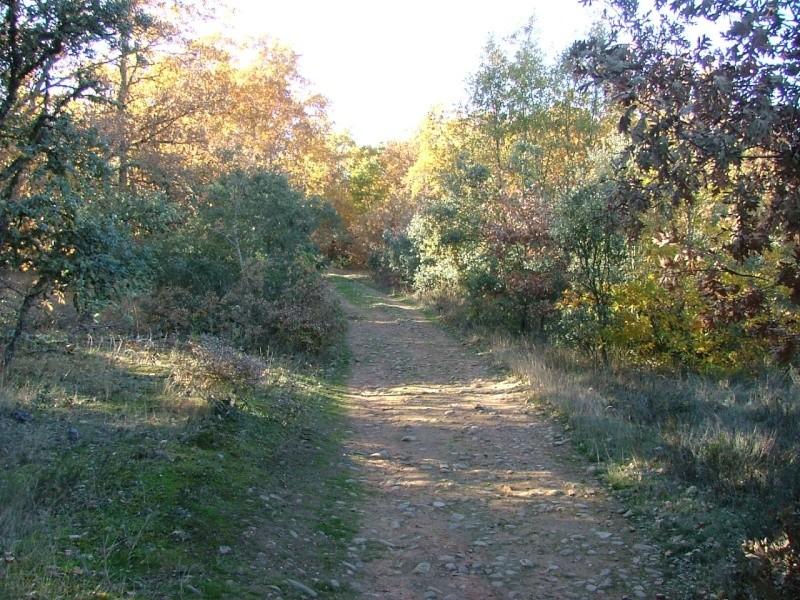 Photos du Camino de Santiago Dscf0112