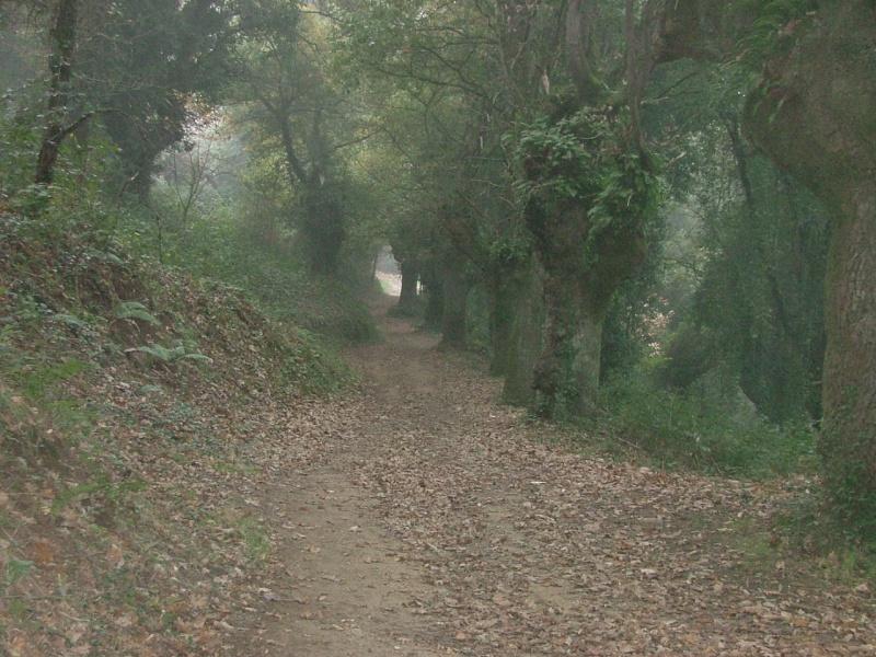 Photos du Camino de Santiago Dscf0211