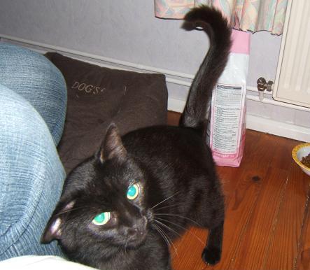 Mila, noire, 4 ans Mila_212